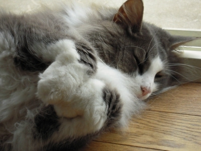 $猫好き整体師の日常