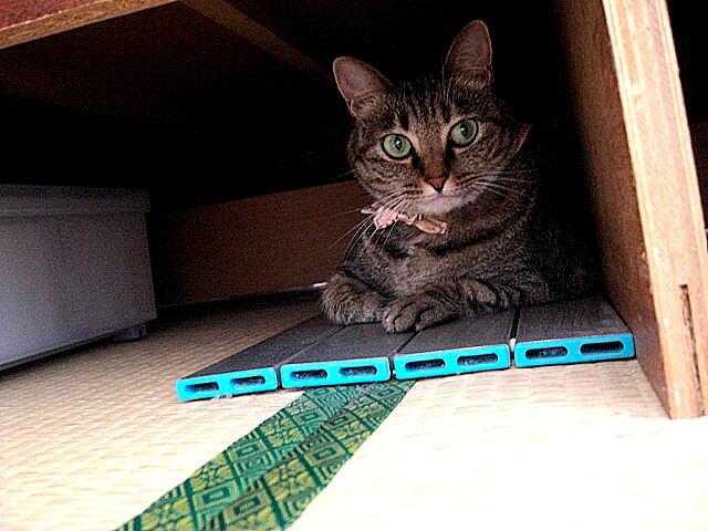 Cat-Megu