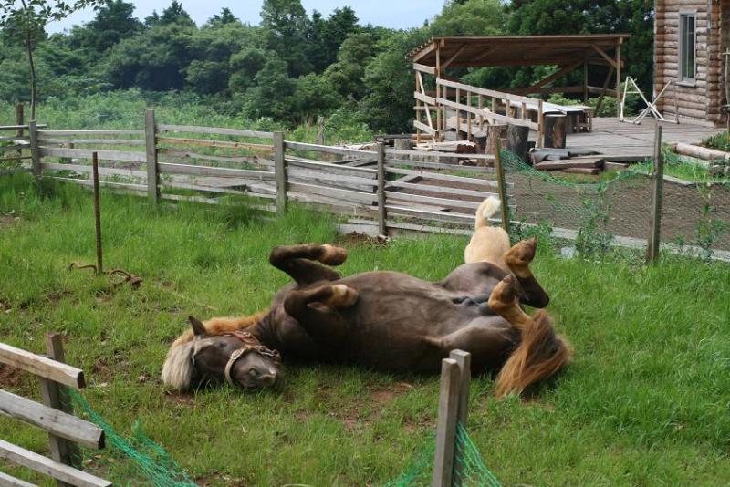 馬を愛する男のブログ Ebosikogen Horse Park-ドックランでポニーごろん