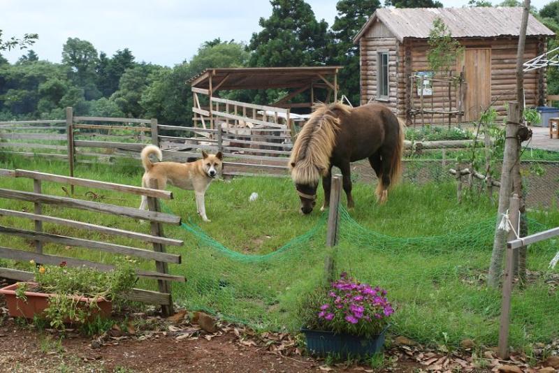 馬を愛する男のブログ Ebosikogen Horse Park-なんでぇ~