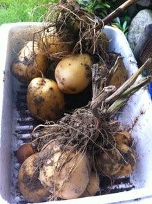 平野農園のブログ