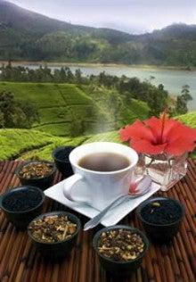 $イギリス紅茶専門店リーフィー英国貴族も愛した紅茶をご自宅へ-キャンディー紅茶ケニルワース茶園