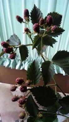 オカメインコのももちゃんと花教室と旅日記-110707_083820.jpg