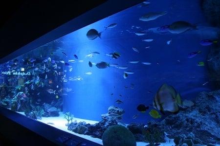 papa gateau, maman gateau-aquarium
