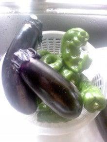 野菜作りの感動体験 田舎のじぶん農園で一家族一菜園