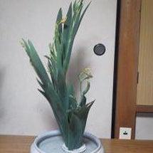 7月9日のお花。