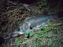 Fishing Report ~茨城の海より  TRY&ERROR blog ver.-7/11シーバス