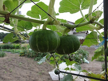 徳島県最端南部、旧宍喰の奥地で『ゆこう』農園をはじめたんです!