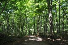 白神山地ツアーで能代山本地区の活性化すっぺ-2011年7月の白神山地「十二湖」最新情報8