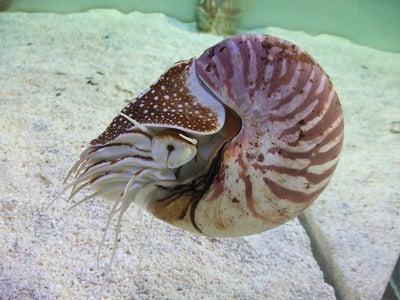 生きた化石!地球上にいる最も古い生物 | ジャンクG