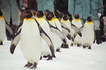 ペンギン店長のブログ