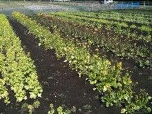 MAKUWAURI ~農家の野菜~-はたぇ2