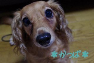 *Welcome to ADONIS Family*-姫1