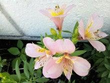 神奈川県 結婚相談所 青い鳥相談所のオフィシャルBlog-未設定