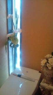 $天使とニャンコ 「幸せの通り道」-20110629104450.jpg
