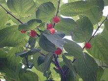 仙台外構エクステリア・造園ガーデンのいい風ブログ-くわの実だよ