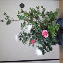 7月16日のお花