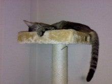 夢に向かって~Still pursuing my dreams!-cattwr1