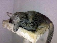 夢に向かって~Still pursuing my dreams!-cattwr2