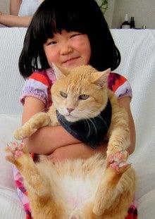 今日の新之介 ~癒し系オヤジ猫~