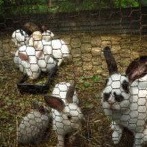 ウサギさんの里親さん…