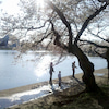 ワシントンの桜の記念切手~~イメージ追加しました。。の画像
