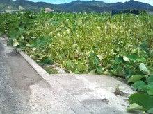 斎藤農園のブログ