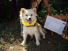 犬猫(その他生き物)迷子・里親捜し&園芸