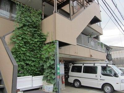 ゴーヤ先生の絵日記~福知山環境会議広報ブログ~