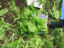 「道北地区(上川・空知方面)の農家・農業で働くHMスタッフの現場レポート」