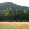 Homa 農法の画像