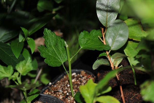 北海道の野生動植物写真-挿し木