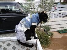 黒猫クゥーのお出かけ日記
