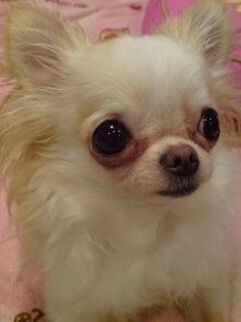 Honey Bunny Baby & Chihuahua-20110720004142.jpg