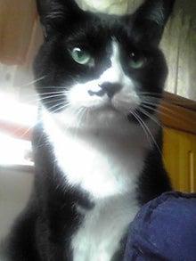 猫マンガ  「猫11匹といれば」 -110727_0840~03.JPG