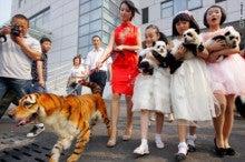 $ココ出し! 東京~上海行ったり来たり。の巻-犬とトラ