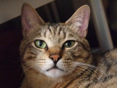$Hanna Cat's          事務所内 保護猫ブログ