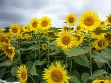 EX人妻りるりるのにゃんにゃん画像と酒とサッカー-sunflower_7