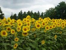 EX人妻りるりるのにゃんにゃん画像と酒とサッカー-sunflower_5