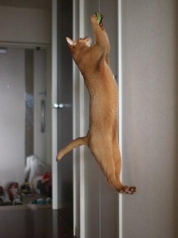 Peek-a-Meow
