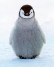 ペンギン店長のブログ-ほ、欲しい・・・