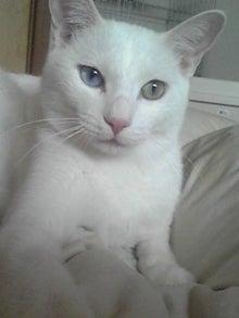 猫マンガ  「猫11匹といれば」 -110802_1359~04.JPG