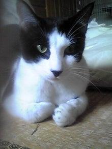 猫マンガ  「猫11匹といれば」 -110802_1644~02.JPG