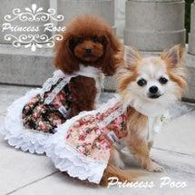 【NEW】姫ドレスわ…