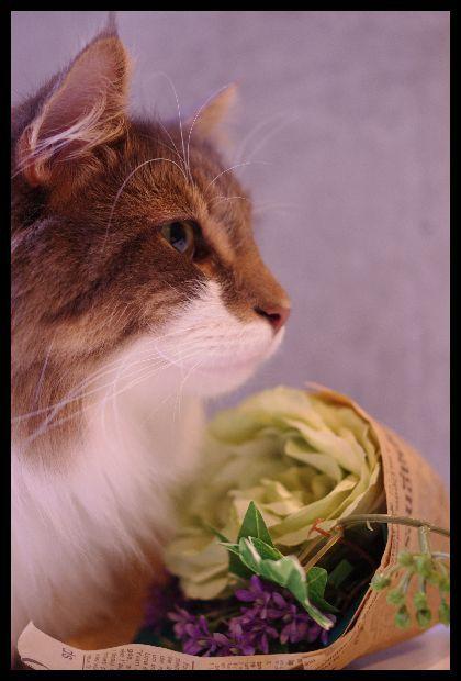 向日葵とかすみ草