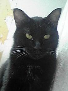 猫マンガ  「猫11匹といれば」 -110804_1240~03.JPG