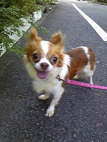 Happy Paws預かり日記-110724_062540.jpg
