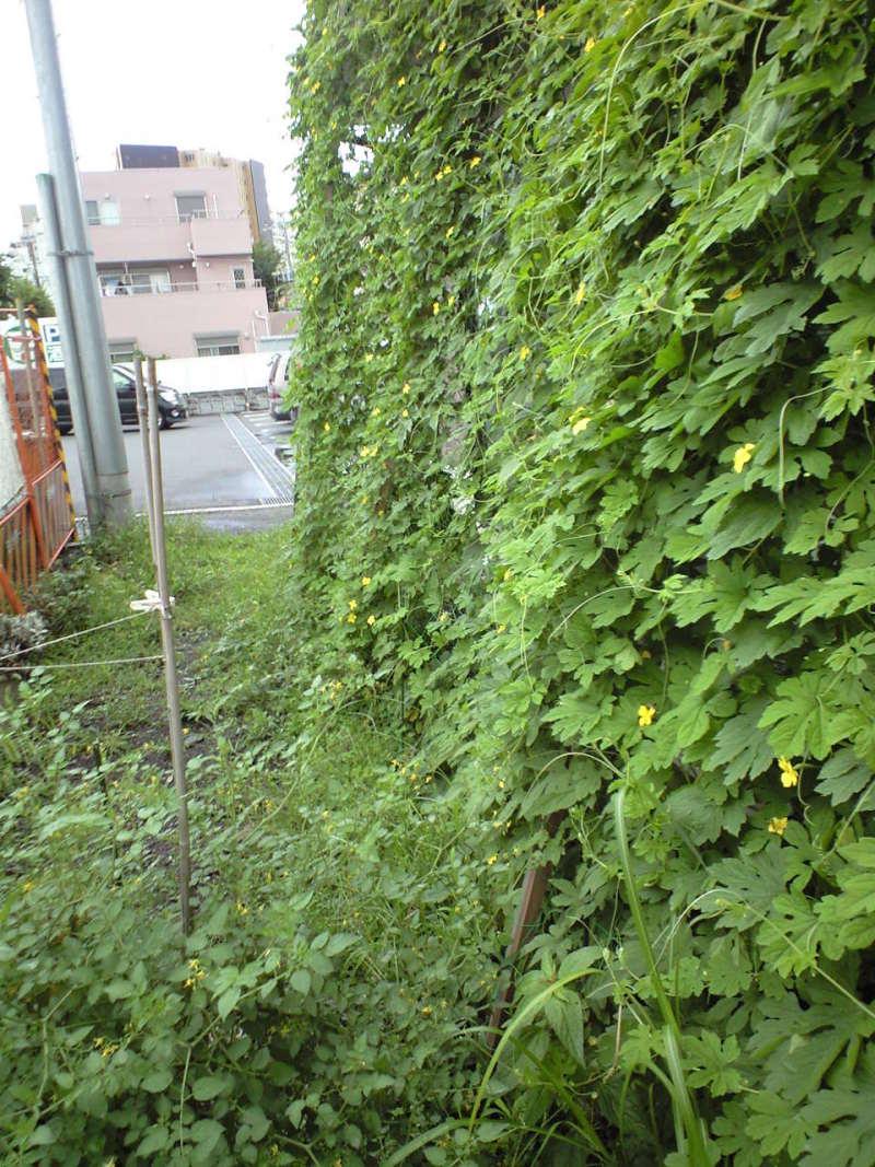 緑のカーテンwithメルプラザ