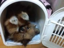 $みみっちのブログ~犬が2匹になりました・・・。-HI3H0163.jpg