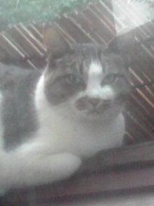 猫マンガ  「猫12匹といれば」 -110808_1849~05.JPG